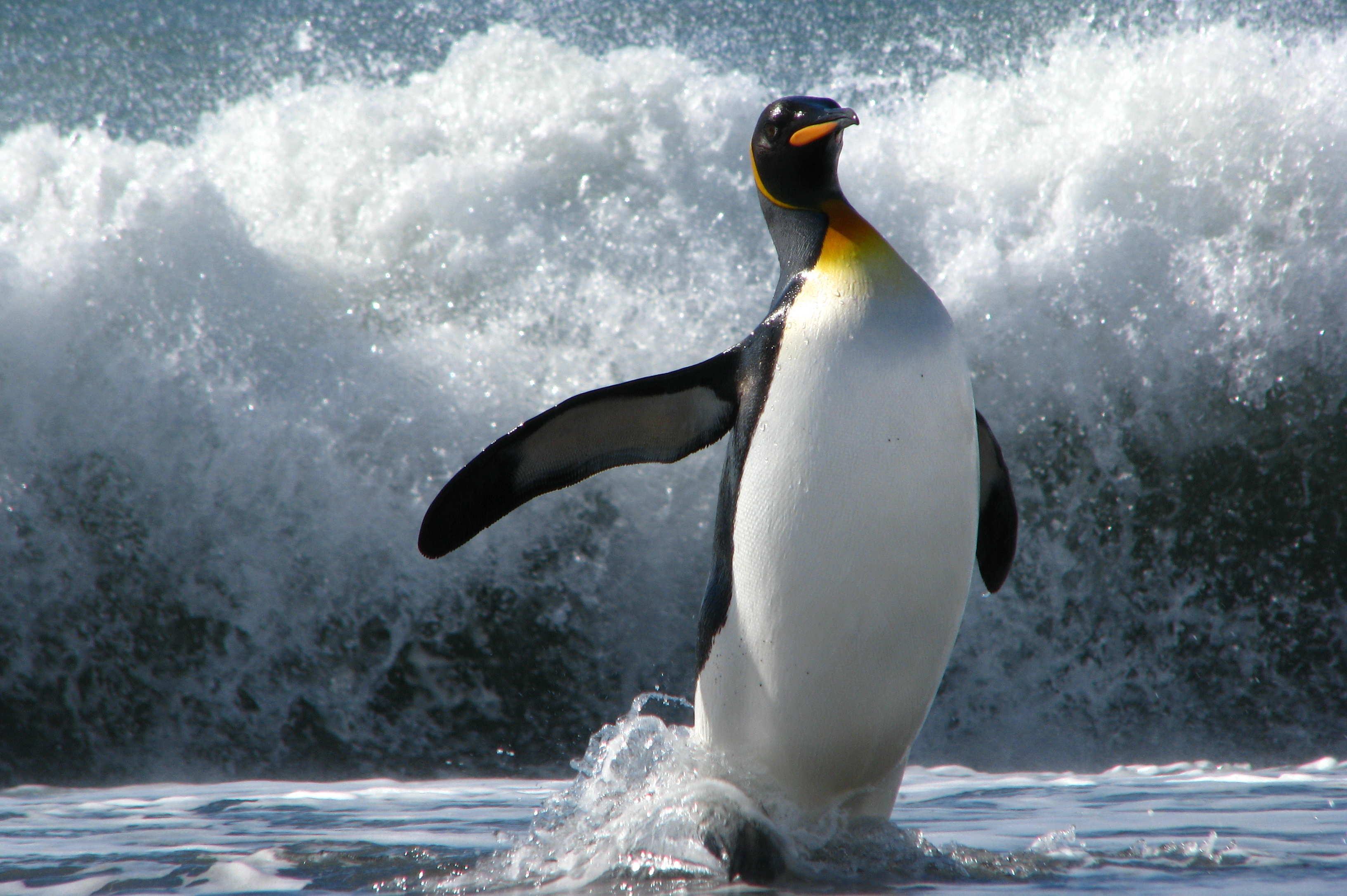 Пингвины скачать бесплатно mp3